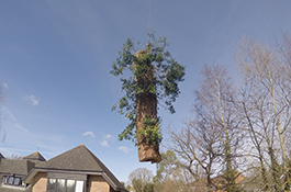 Tree Dismantling 2 - Goodwood Tree Surgery