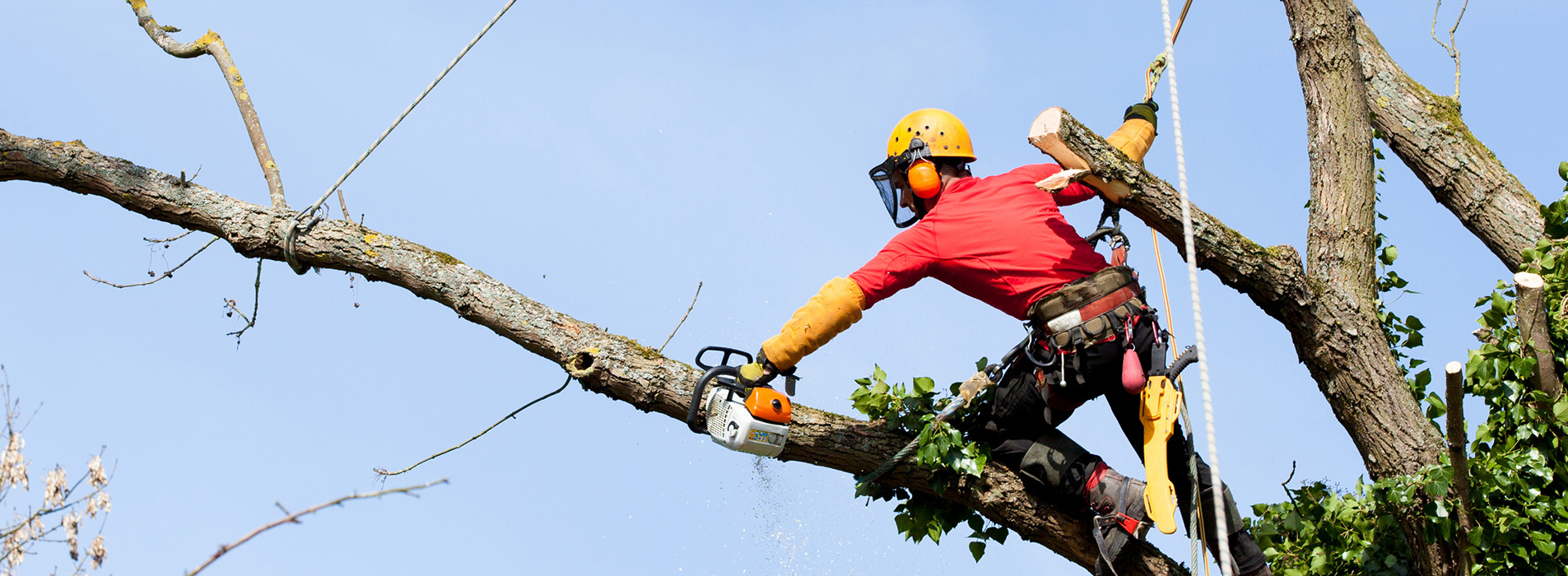 Commercial and Public Tree Surgery