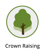 Crown Raising Berkshire
