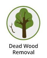 Deadwood Removal Berkshire