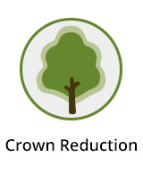 Crown Reduction Berkshire