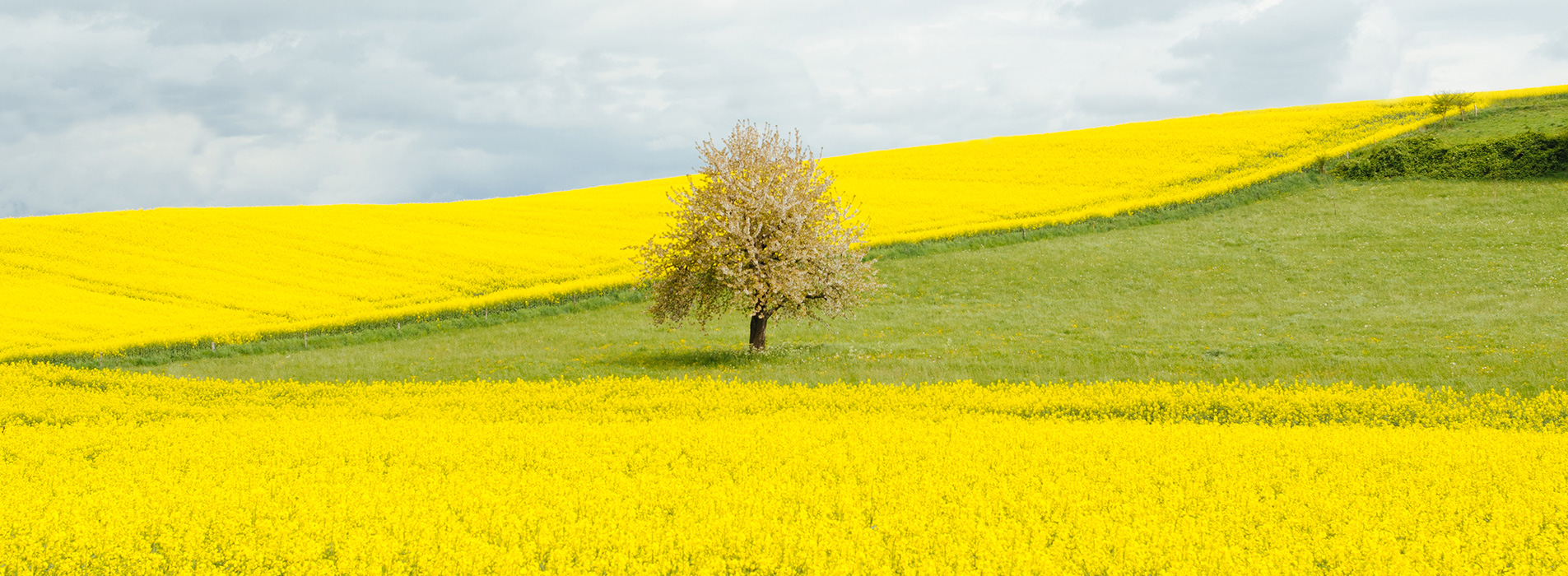 Yellow Field Header - Tree Care Services